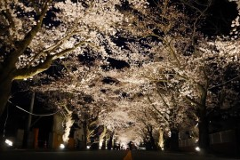 Hanami & Hope in Tomioka