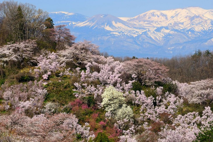Sakura Bliss Hike at Hanamiyama