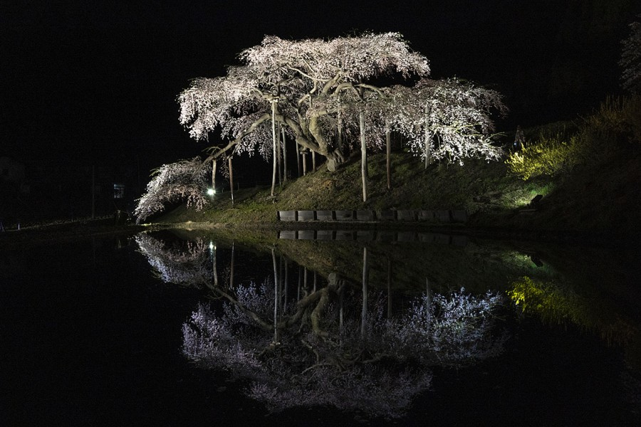 나카지마 지조자쿠라