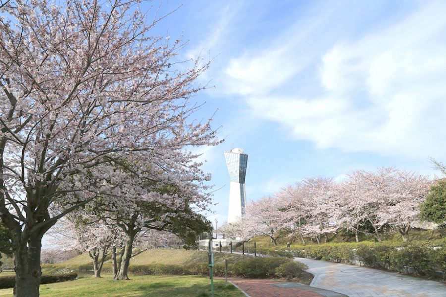 미사키(三崎) 공원의 벚꽃