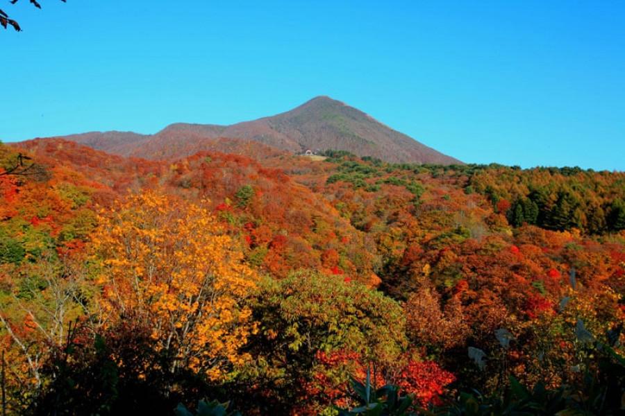 Cung đường lá vàng (Gold Line) trên núi Bandai