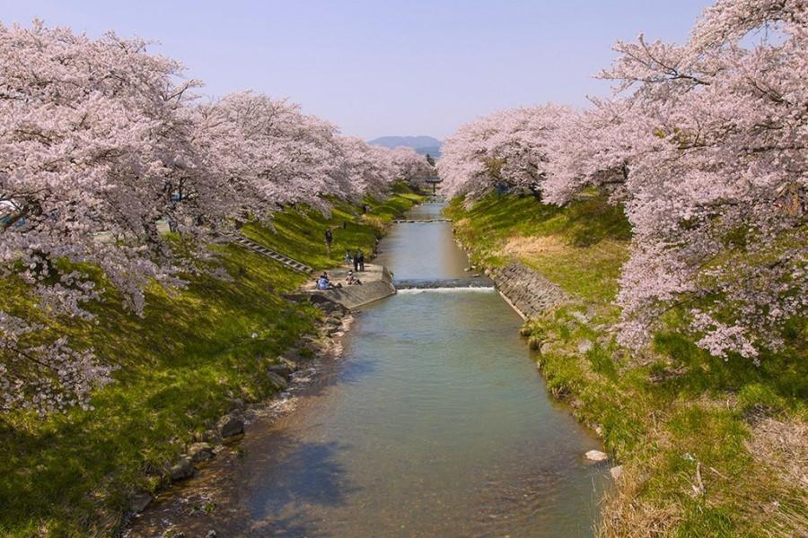 후지타가와 후레아이 벚꽃