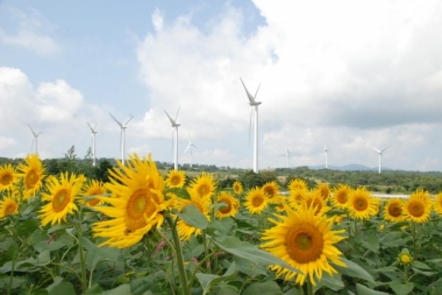 Koriyama Nunobiki Kaze-no-Kogen (Koriyama Nunobiki Wind Farm)