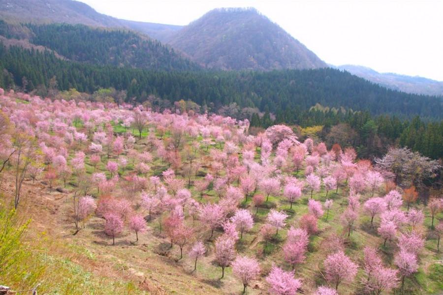 Sakuratoge Pass
